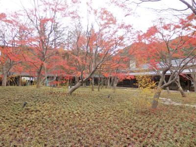 新築の建物は四季の風景と調和する