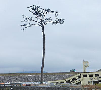 「奇跡の一本松」の沖で新たな防潮堤が作られている