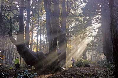 光射す幻想の森